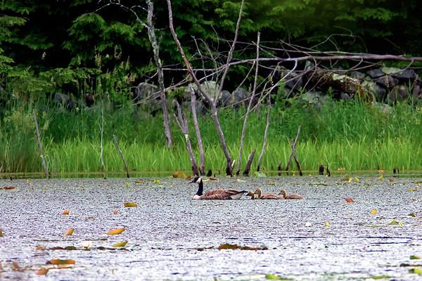 Lubberland Creek Preserve