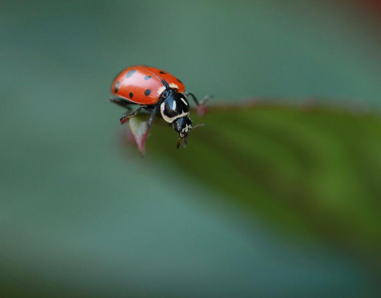 lady bug 10.jpg