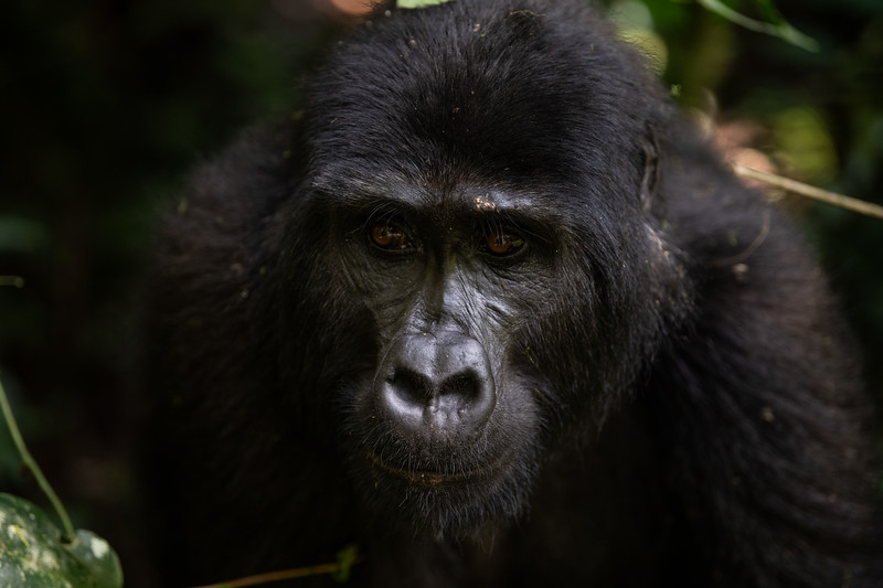 Uganda_T_Gor-381.jpg
