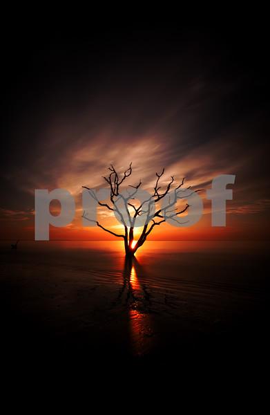 Oak Tree on Fire.jpg