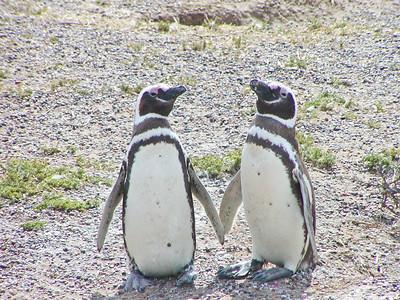 Argentina, Puerto Madryn & Penguins