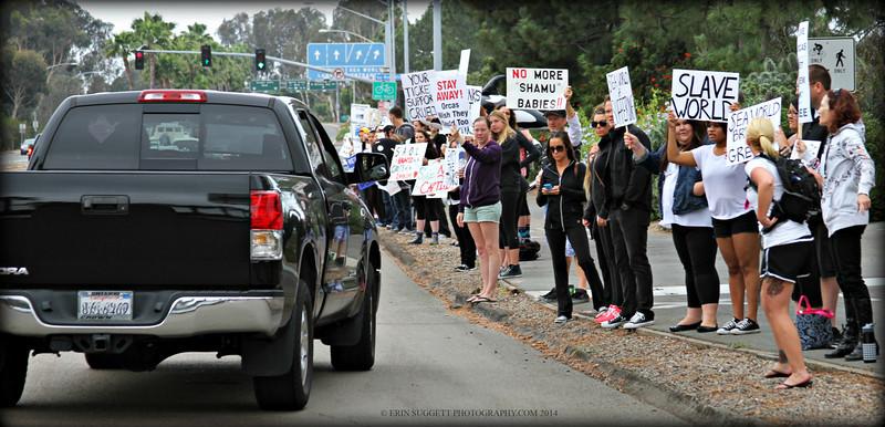 Sea World Protest 2014