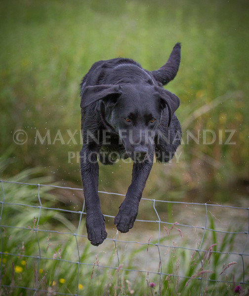 Dave Browns Dog-.jpg