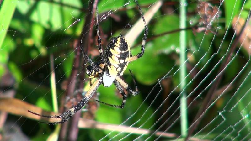 spider_01.mov