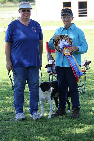 AKC Herding Trial April 2015 Judge Susan Abrams