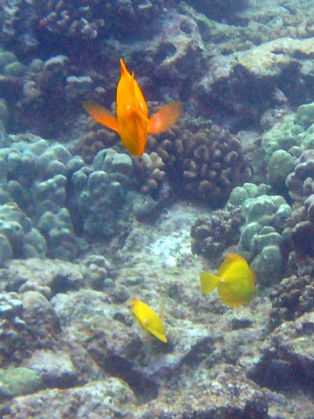 495- 20080416- Hawaii 20-Snorkelling IMG_0722.jpg