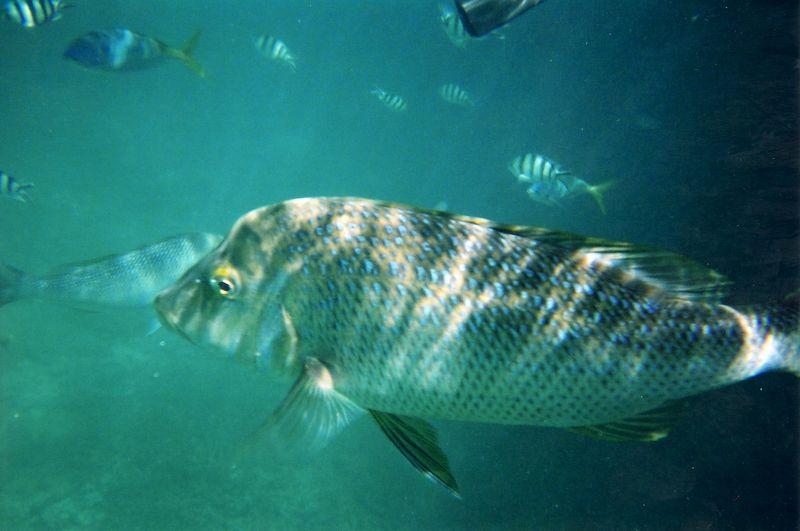 big_fish.jpg