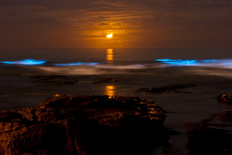 Bioluminescent tide (red tide) and short star trails at La Jolla Cove glows under a crescent moon.