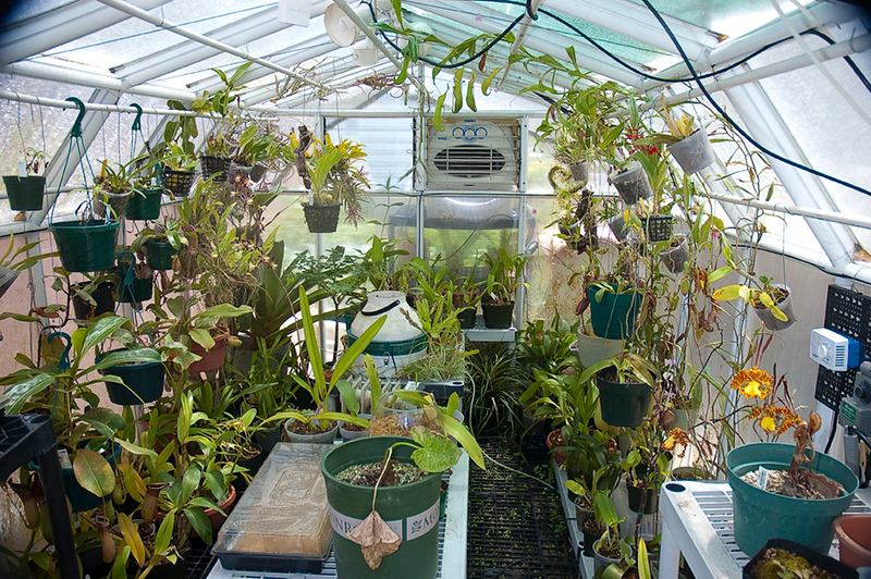2092462066-greenhouse-2-18-11.jpg