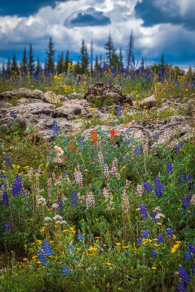 NR Flowers.jpg