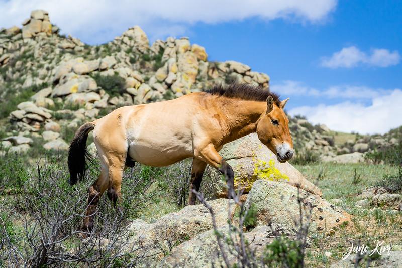 Kustei National Park__6109506-Juno Kim.jpg