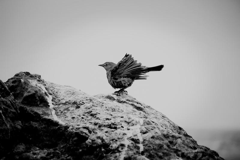 bird-Recovered.jpg