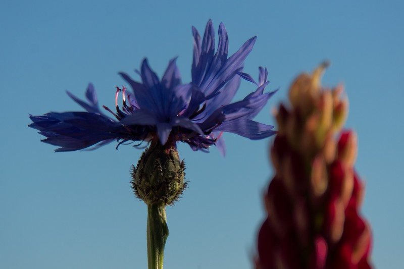 Blumen 001 Filter.jpg