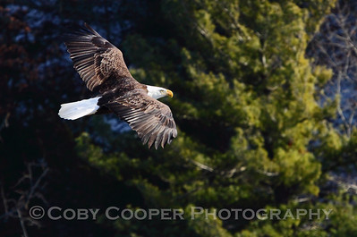 Eagles 2010
