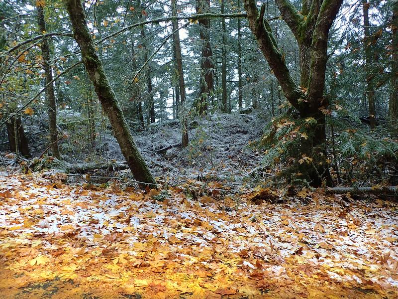 PB030077 Mt Erie winter Fall forest.jpg