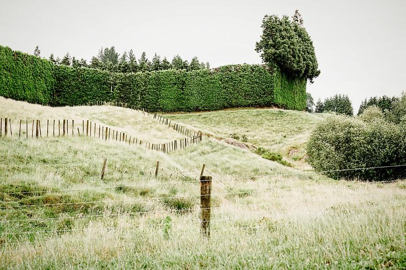 Landscape near the Hilly House AirBnB in Karapiro, NZ.