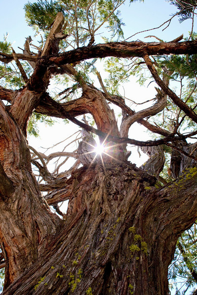 trees-n-stars-yosemite.jpg
