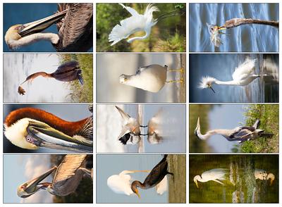 Shorebirds 3