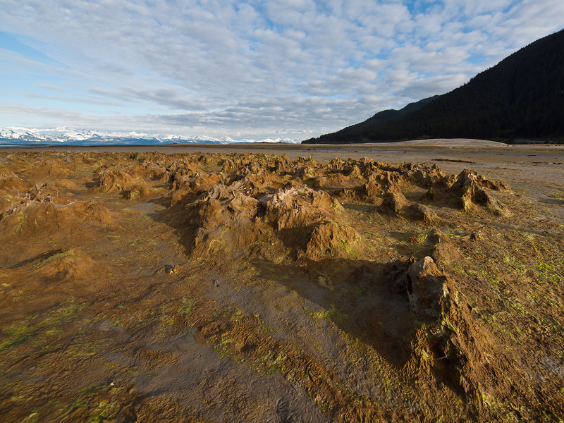 Eagle Beach, Juneau, where mountain like spikes of algae, sand and small plants can be found at low tide.