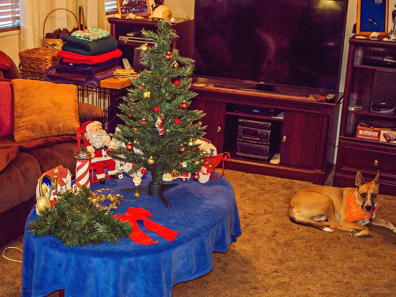 _1050025_  pl5 12x40 christmas take down,tip,paws,mal,mov.jpg