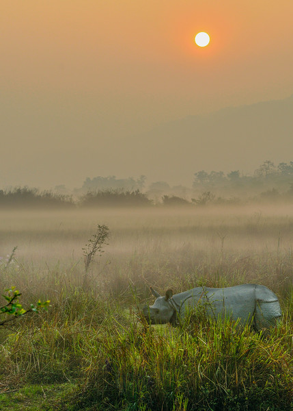 Rhino-at-sunrise-Kaziranga.jpg