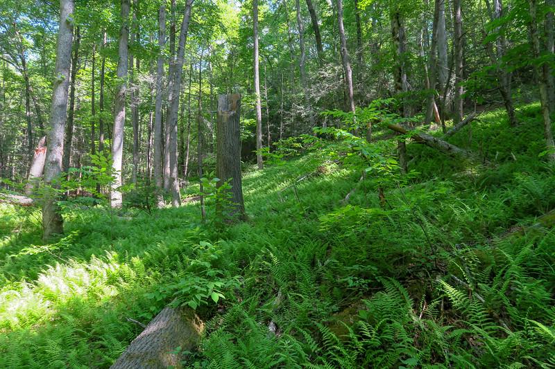 Bradley Creek Trail -- 2,430'