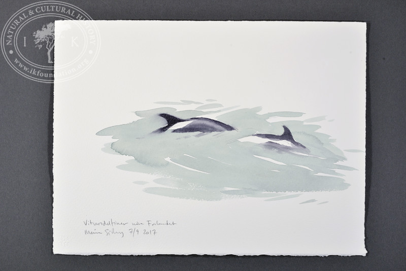 "White-beaked dolphins near Forlandet, Svalbard | 7.9.2017 |  ""I want to convey what I see with immediacy and simplicity to make the viewer feel present on the Arctic scene."" 