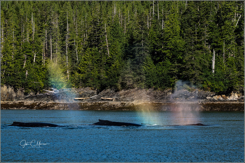 SR3_5258 Three whales LPN W.jpg