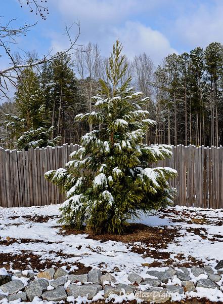 2010 White Christmas