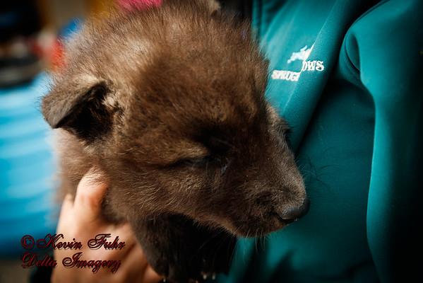 Zander Wolf Dog