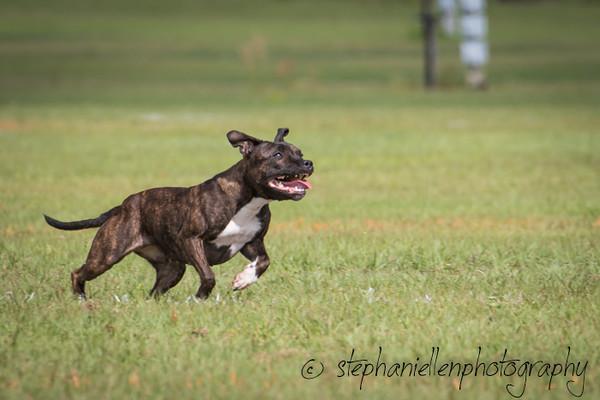_MG_2709Up_dog_International_2016_StephaniellenPhotography.jpg