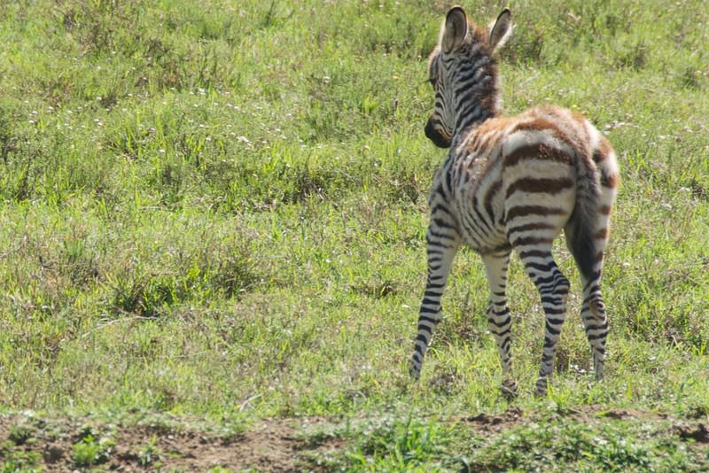 Kenya.Card1.02.2014 264