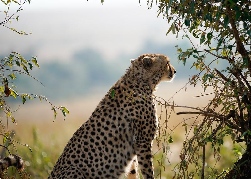 safari-2018-67.jpg
