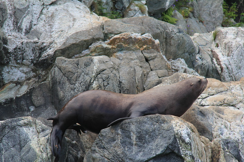 20160719-123 - WEX-Inian Islands-Skiff Tour-Sea Lions.JPG