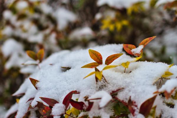 2017-01-06 Snowy Day