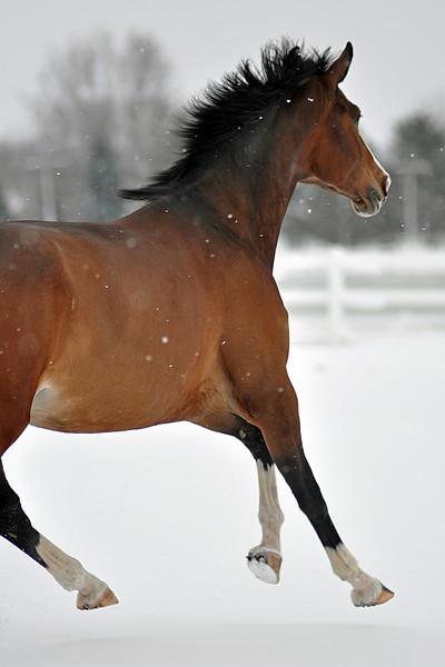 Snowy Dalanta 039 RETOUCHED.jpg