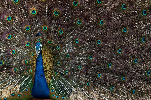 India - Birds