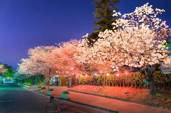 Nihon No Haru