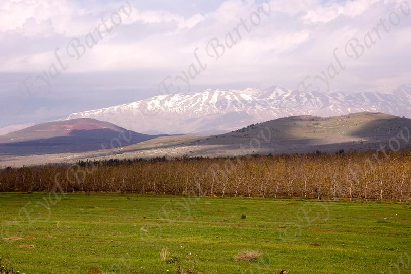 Golan 01.jpg