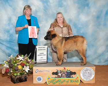 Marshall 2014 Puppy show & NRG 2014 show