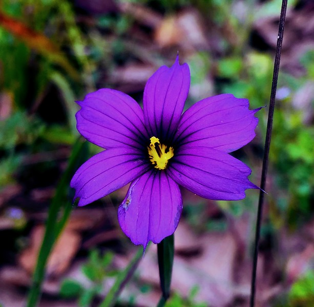 bright purple flower