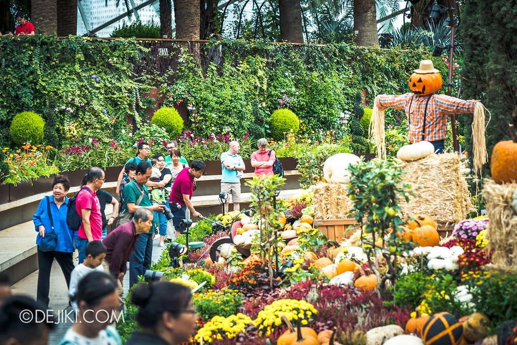 Gardens by the Bay - Autumn Harvest Floral Display - Flower field back row