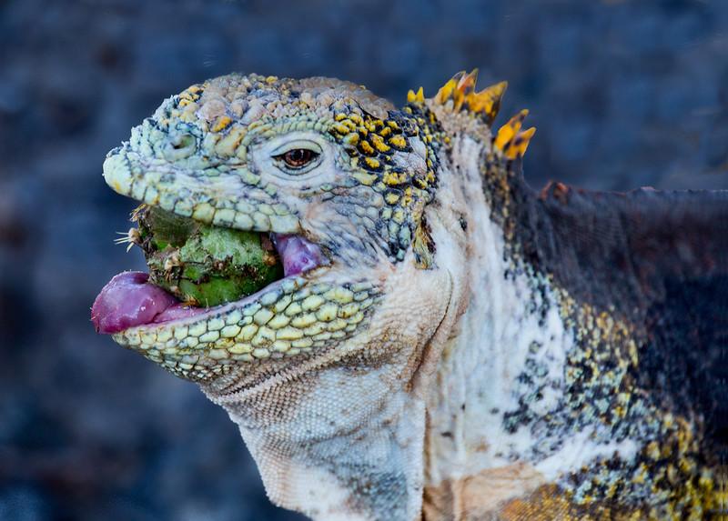 Galapagos_MG_4979.jpg