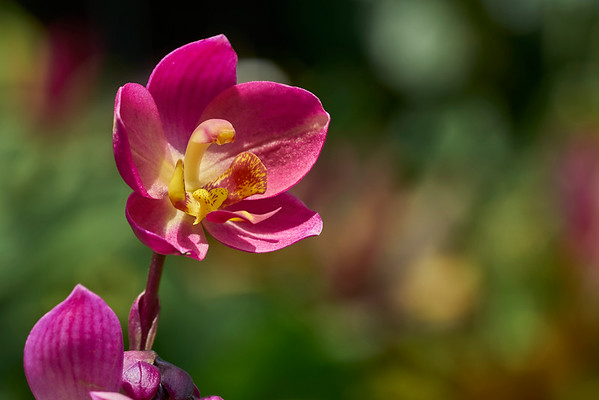 Flower Macro