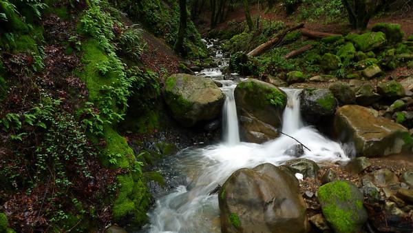 Uvas Canyon Waterfalls (01.03.2011)