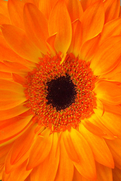 OrangeFlower02.jpg