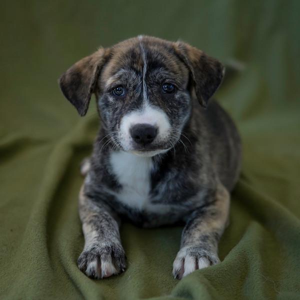 20170415-Puppies-6.jpg