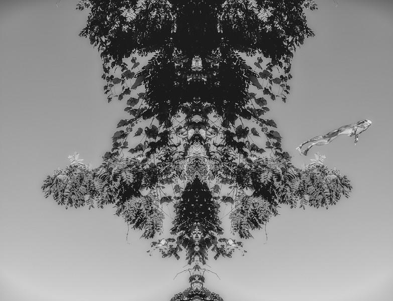 _DSF1834-Edit.jpg