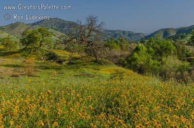 Dry Creek Preserve - Tulare County, CA