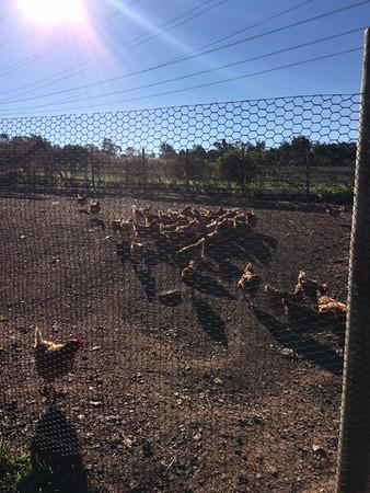 Norz Hill Farm Trip